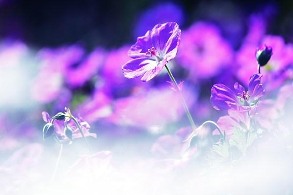Фото: thinking-silence.deviantart.com