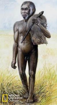 """Homo_floresiensis"""