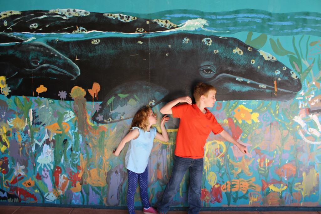 Image Result For Volunteer Aquarium Of The Pacific