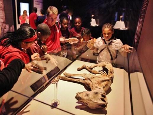 Mummies of the World Exhibtion Student Program
