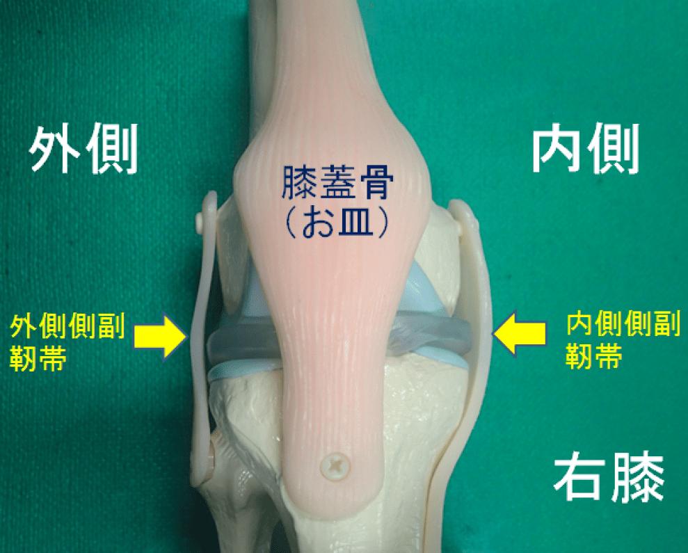 右膝の内側側副靭帯