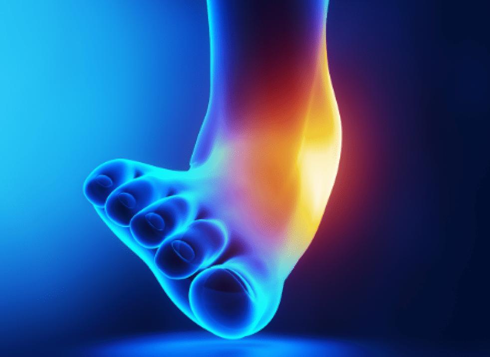 足首外反の図説 三角靭帯が突っ張りそれ以上のテンションがかかると損傷する