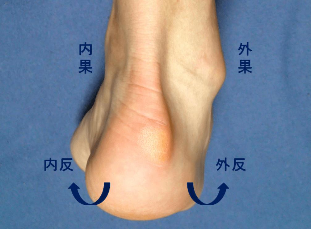 足首の動き 内反と外反の図説