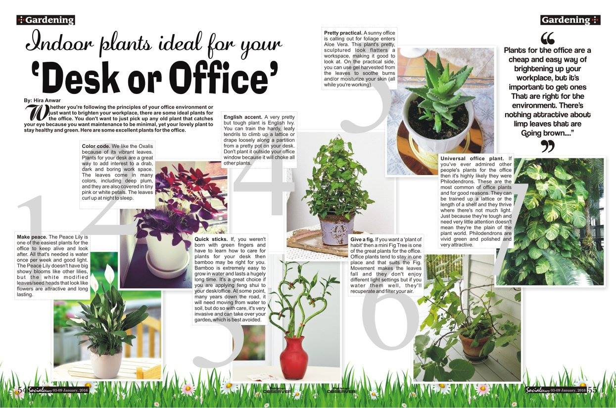 Indoor Plants For The Office 7 Indoor Plants Ideal For Your Desk Or Office Social Diary