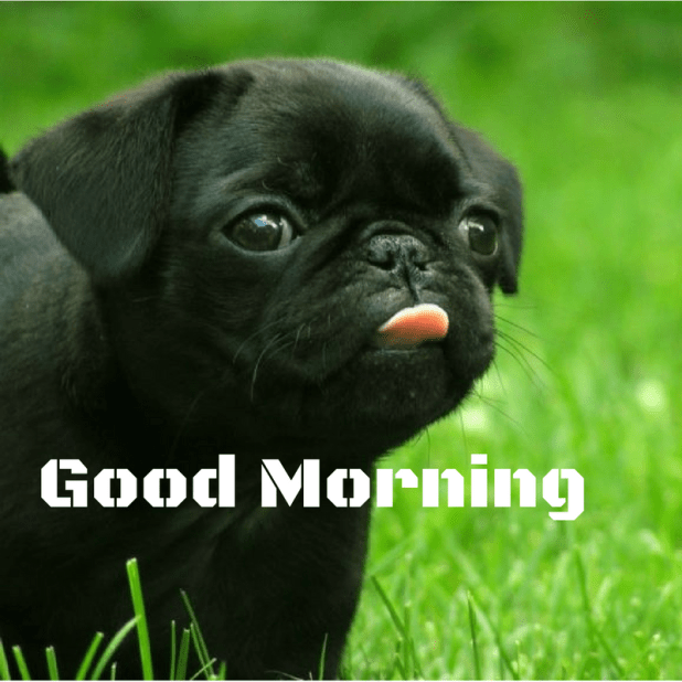 Good morning cute beautiful puppy free download images