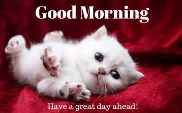 Cute kitten good morning image