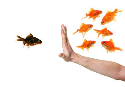 acta / Ein schwarzer Goldfisch wird durch eine haltende Hand von den richtigen Goldfischen getrennt - Diskriminierung