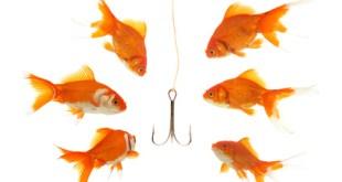 """""""Recruitment"""": Sechs Goldfische die auf einen Angelhaken schauen"""