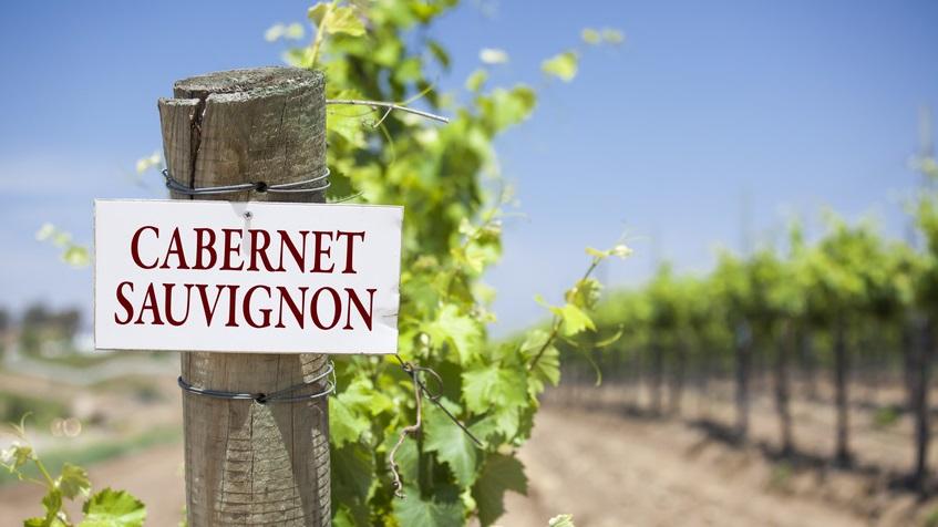 Infographics & Guide to Cabernet Sauvignon Wine Grape Variety