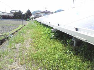 雑草が相当茂ってきた太陽光発電所