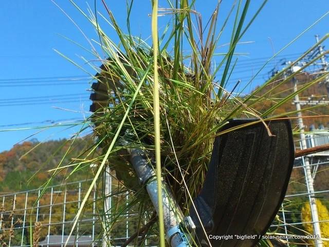 刈払機に巻き込まれ絡みついた草
