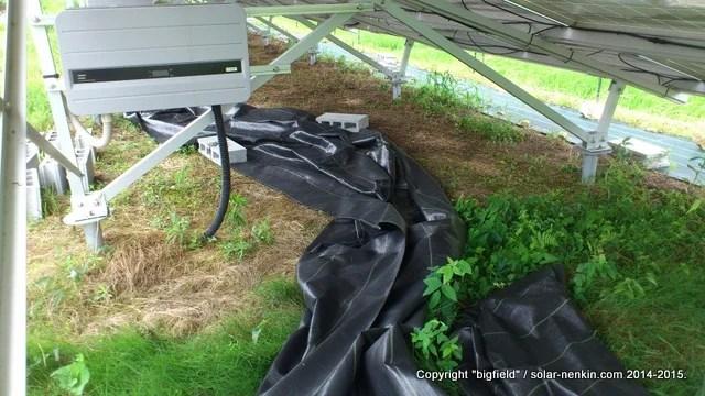 台風11号の影響でめくれ上がった防草シート