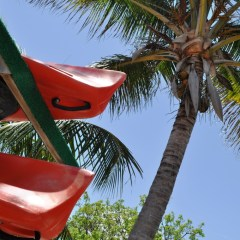 Join Solo Travel Girl on a Day Kayak Trip in the Lower Florida Keys, Dec. 8, 2013