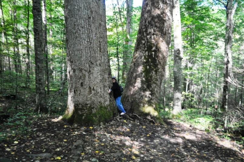 Hugging a Tree in Joyce Kilmer Memorial Forest, North Carolina, Oct. 2014