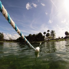 Watch Your Step and Carry a Big Foam Noodle: Tips for Visiting Warm Mineral Springs, Florida