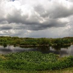 Florida Travel: Getting Wild on the Lake Apopka Wildlife Drive