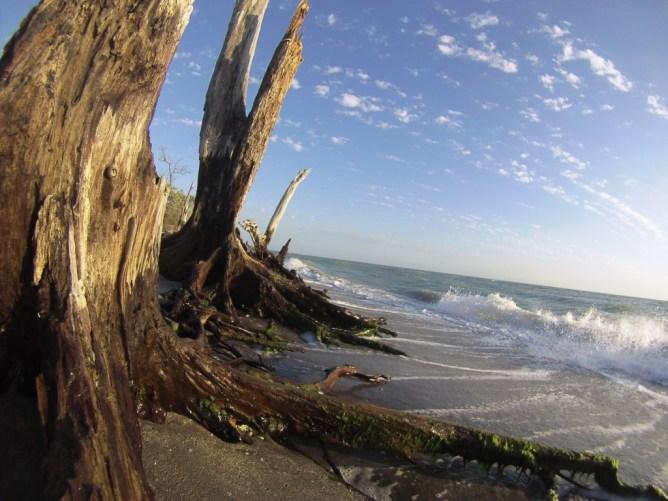 Dose of Vitamin Sea at Stump Pass Beach State Park, Englewood, Fla., April 2016
