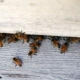 Sofitel Philadelphia's Roof Garden Buzzes with Honey Bees