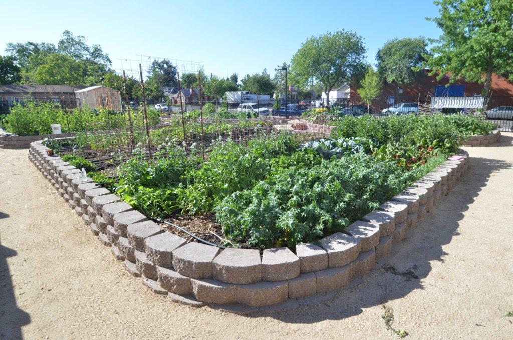 sacramento-food-bank-demonstration-garden