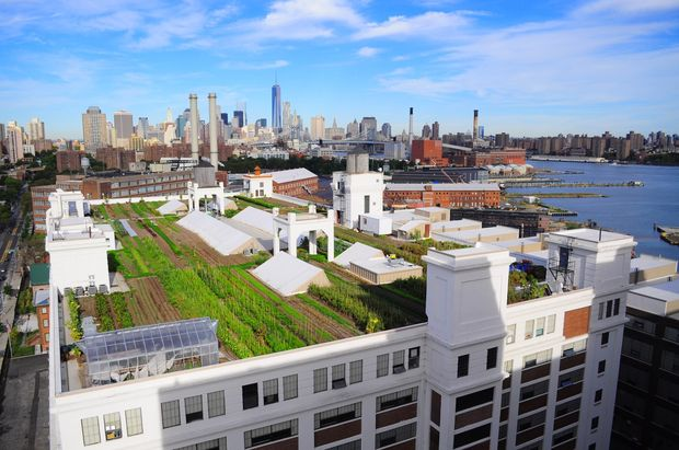 New-yorkers-are-converting-empty-rooftops-into-farms