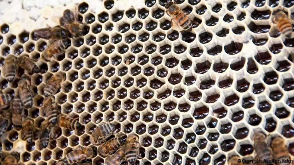 honey-coop-pays-farmers-not-to-burn-forests