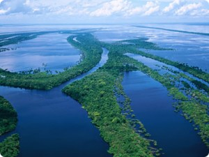 Mouth of the Amazon river