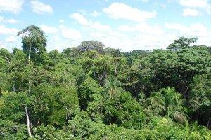 Rainforest reaches