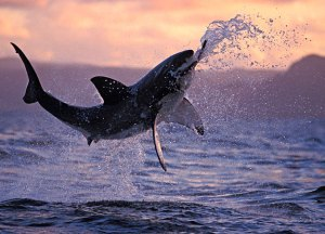 Real Sea Monsters