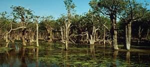 The Upper Amazon