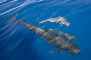 Largest animals in the sea