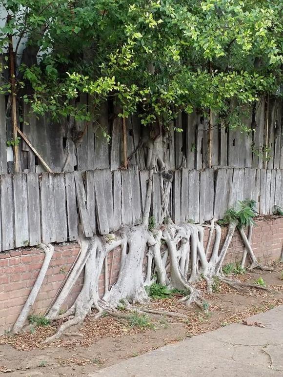 Natureza vencendo obstáculos