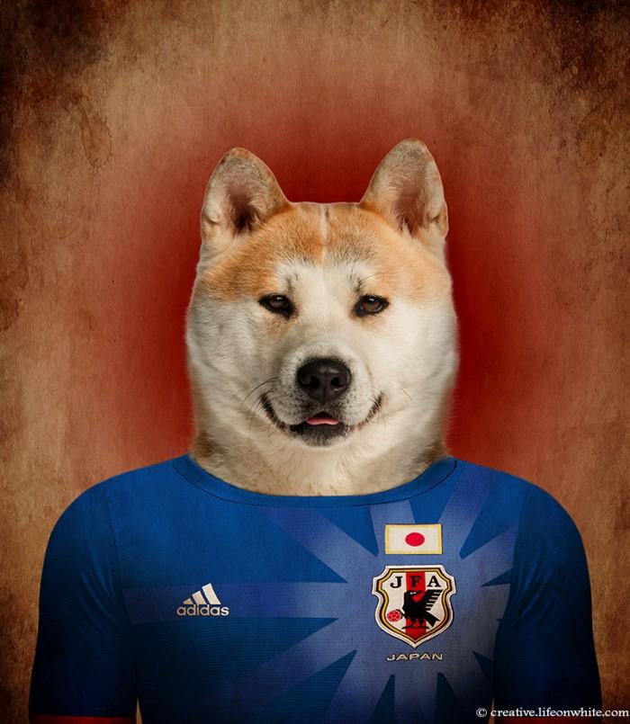 caes-selecao-japão
