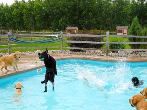 dog-pool-party-lucky-puppy-7