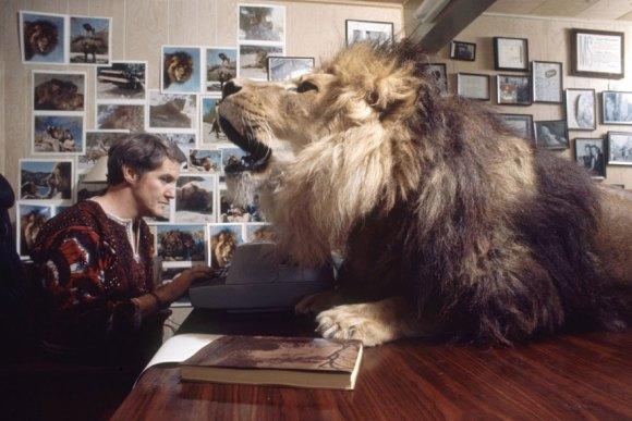 Vivendo com um Leão (4)