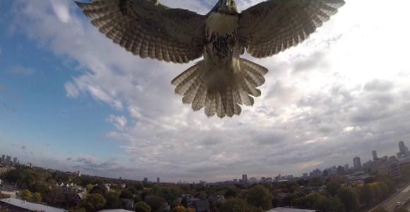 Falcão abate um drone em ataque certeiro