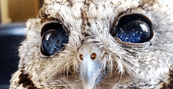 Zeus é uma coruja cega que tem lindos olhos cheios de estrelas