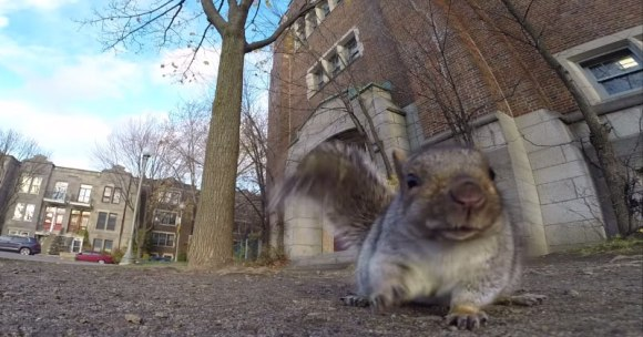 squirrel-nabs-gopro-carries-it-up-tree-and-drops-it[1]