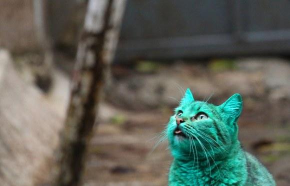 Gato Verde da Bulgária 3
