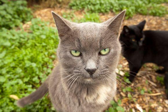 Santuário dos gatos 5