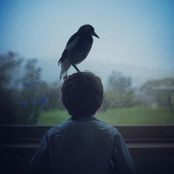 Amizade entre menino e pássaro 05