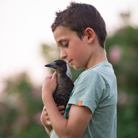 Amizade entre menino e pássaro 12