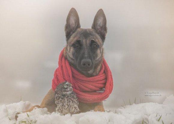cachorro-20