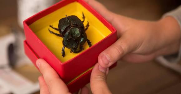 O Escaravelho do Diabo: livro que entusiasmou gerações vai virar filme