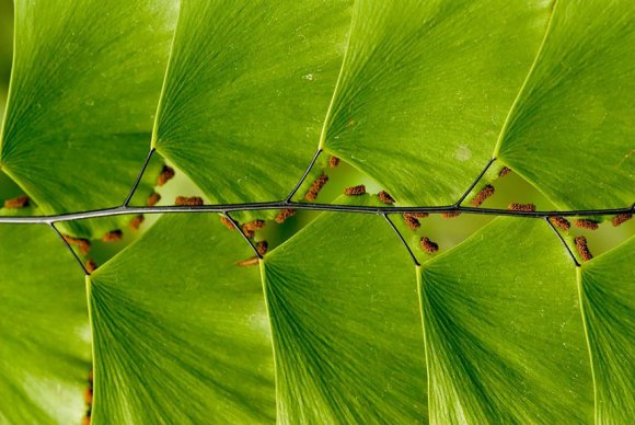 Perfect-Geometric-Patterns-In-Nature17__880[1]