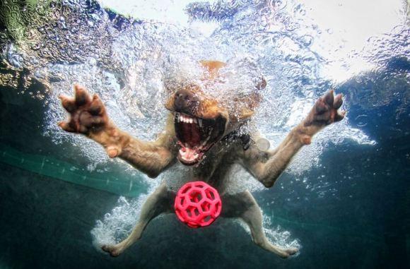 Fotos de cachorros 16