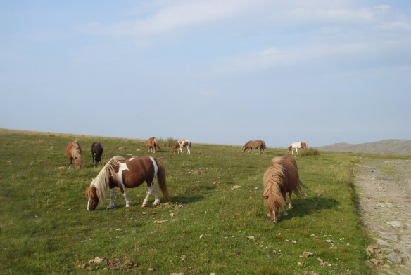 As timeless as a stone circle; ponies on the moor.