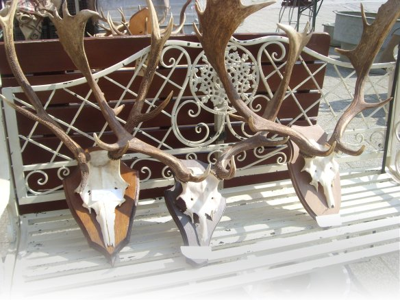 Antlers for sale! Tavistock Market - Something about Dartmoor