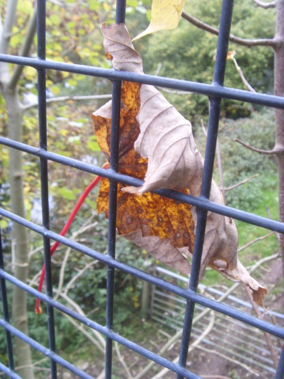 autumn-leaf-caught-on-the-wire-of-the-bridge-across-the-tarka-trail-something-about-dartmoor