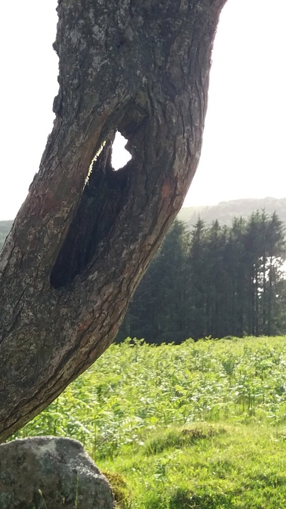 B for Burrator (7) Hawthorn - Sunday 11th June 2017