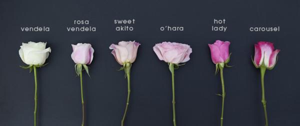 ST_Bouquet_Blueprint_Pink_Ombre_Roses_0003